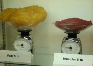 grasa-y-musculo